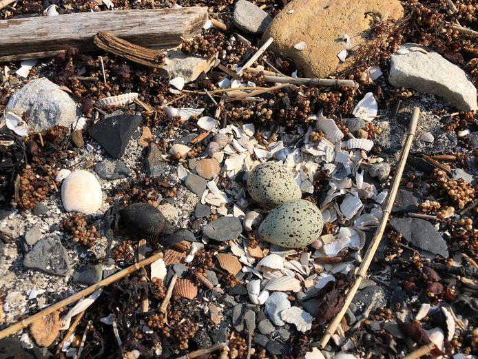 Het tweede nestje, waarin vrijdag twee eitjes lagen.