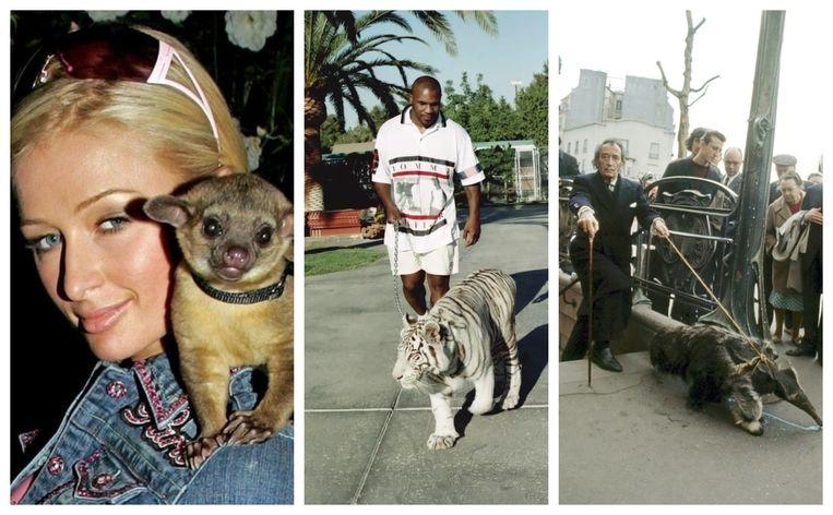 Paris Hilton, Mike Tyson en Salvador Dali