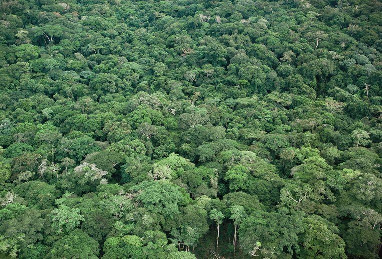 Tropisch regenwoud in Congo Beeld Jabruson / NaturePL