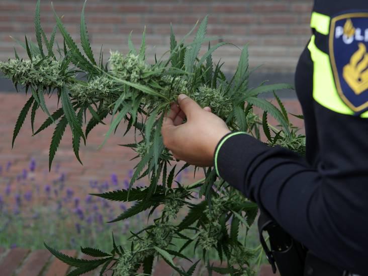 Twee Bosschenaren aangehouden in Tilburg voor aanhanger met hennepafval