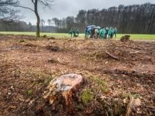 Provincie Overijssel: onderzoek naar minder bomen kappen