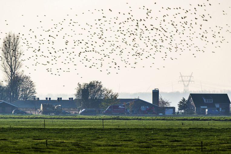 Een van de twee met vogelgriep besmette pluimveebedrijven in Kamperveen. Beeld ap